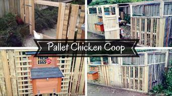Simple Pallet Chicken Coop