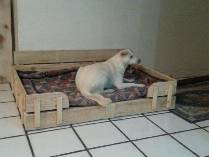 wooden pallet dog bed with cushion