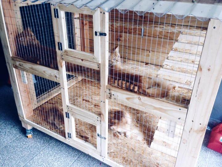 low-cost wooden pallet pet cage