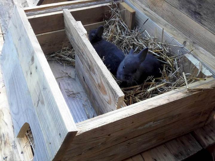 wooden pallet box style mini rabbit house