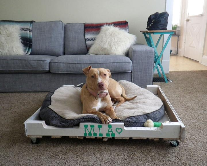 dog bed made of old pallets
