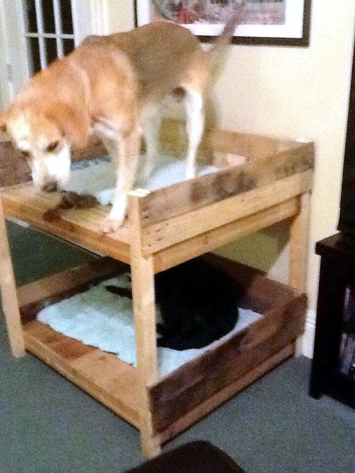 stylish wooden pallet dog bunk bed