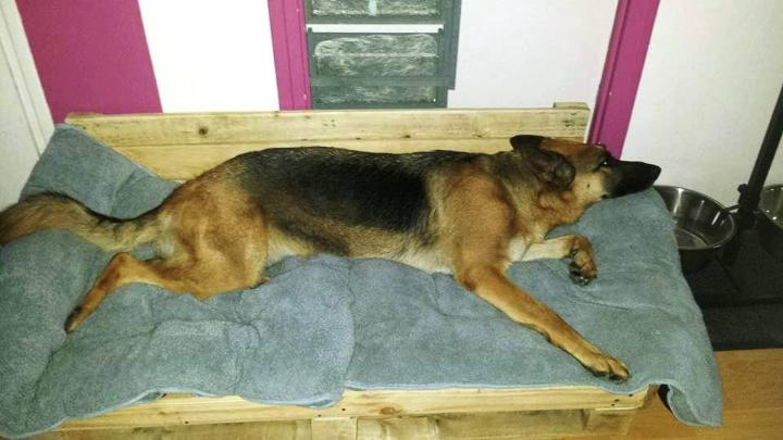 low-cost wooden pallet dog bed