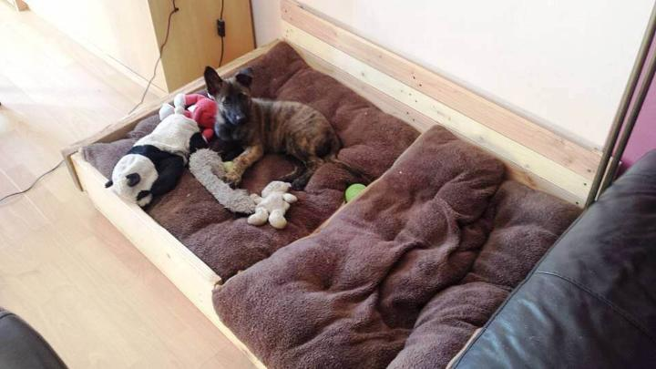 custom-built wooden pallet dog bed
