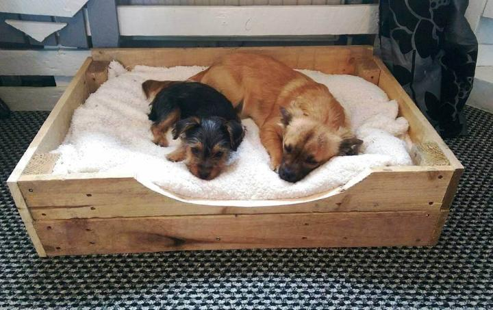 handmade pallet pet bed