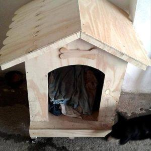 self-installed pallet dog house